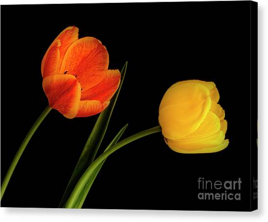 Canvas Print featuring the photograph Tulip Pair by Scott Kemper
