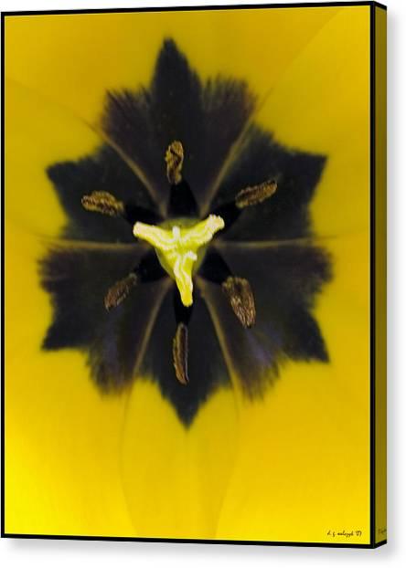 Tulip Pixie Canvas Print by Daniel G Walczyk