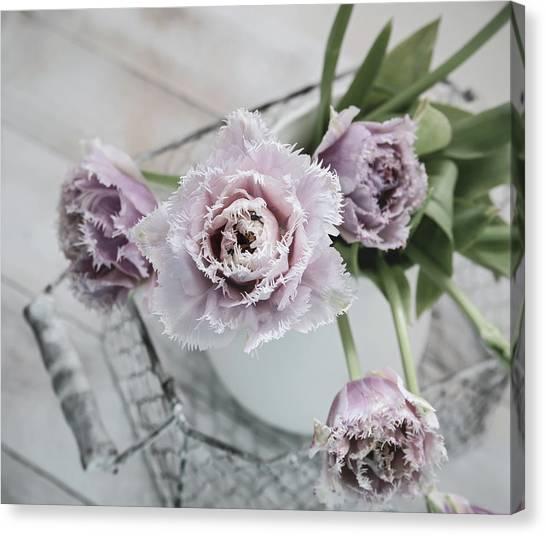 Charming Cottage Canvas Print - Tulip Ruffles by Kim Hojnacki