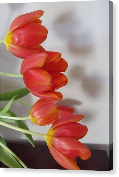 Tulip Shadow Canvas Print by Judith Turner