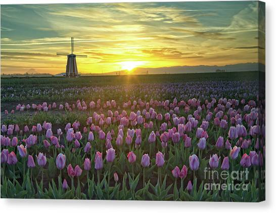 Canvas Print featuring the photograph Tulip Sunrise by Craig Leaper
