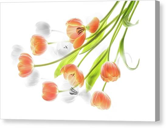 A Creative Presentation Of A Bouquet Of Tulips. Canvas Print