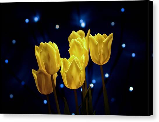Bloom Canvas Print - Tulip Twinkle by Tom Mc Nemar