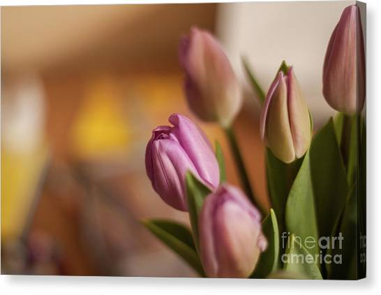 Canvas Print - Tulips 2 by Jo Jackson