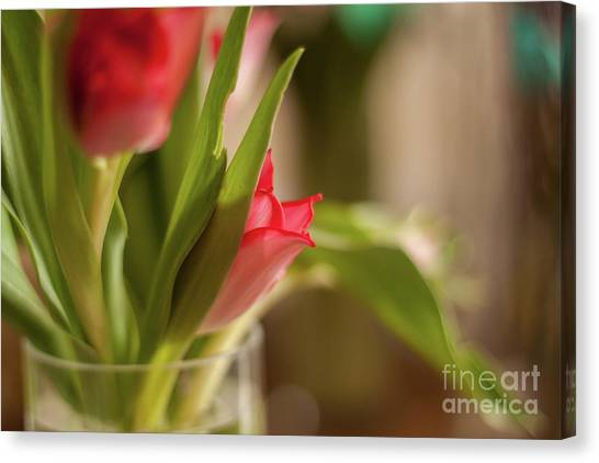 Canvas Print - Tulips 3 by Jo Jackson