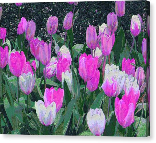 Tulips 327dp Canvas Print by Brian Gryphon