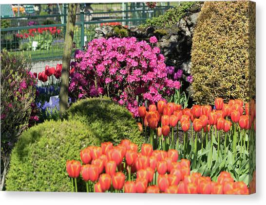 Tulips And Rhodies Canvas Print