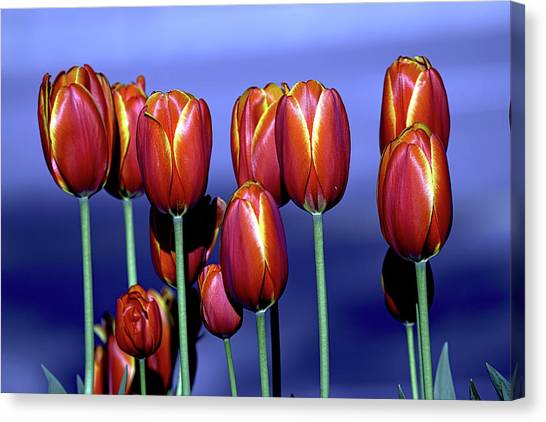 Tulips At Attention Canvas Print