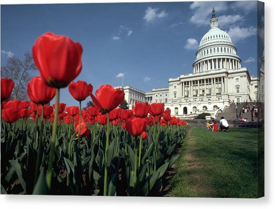 Tulips At The Capitol Canvas Print by Carl Purcell