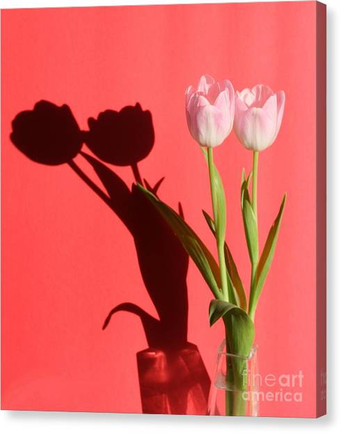 Tulips Casting Shadows Canvas Print