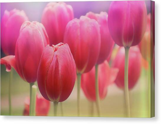 Subtle Canvas Print - Tulips Entwined by Carol Japp