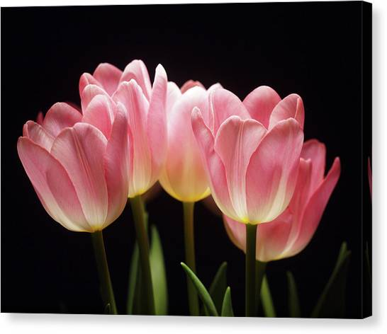 Tulips For Tania Canvas Print