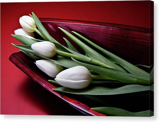 Tulip Canvas Print - Tulips II by Tom Mc Nemar