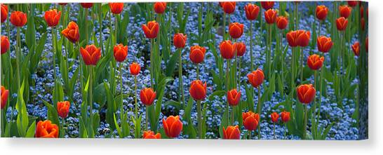 Vancouver Island Canvas Print - Tulips In A Garden, Butchart Gardens by Panoramic Images