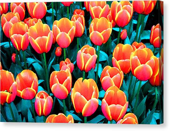 Tulips In Holland Canvas Print by Gene Sizemore