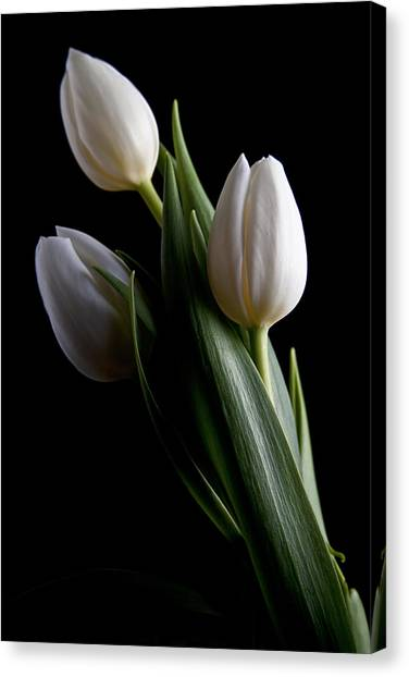 Tulips Canvas Print - Tulips Iv by Tom Mc Nemar
