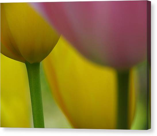 Tulips Canvas Print by Juergen Roth