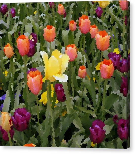 Tulips Canvas Print by Rodger Mansfield