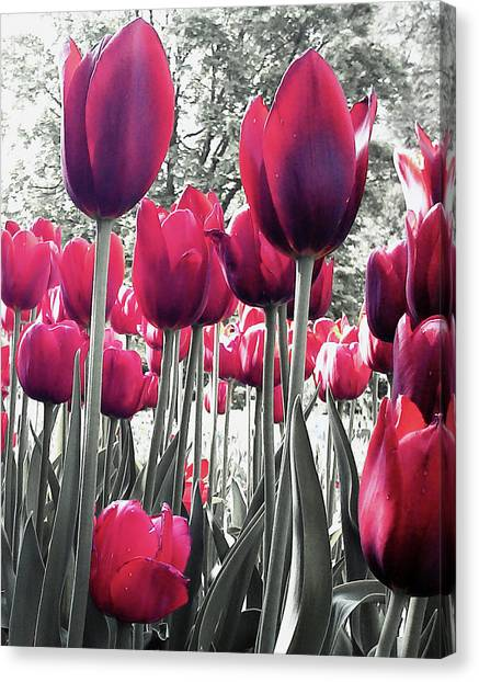 Tulips Tinted Canvas Print