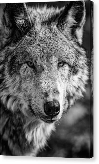Tundras Canvas Print - Tundra Wolf by Rick Berk