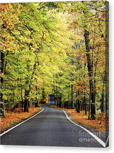 Tunnel Of Trees Canvas Print
