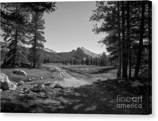 Tuolumne Trail Visit Www.angeliniphoto.com For More Canvas Print