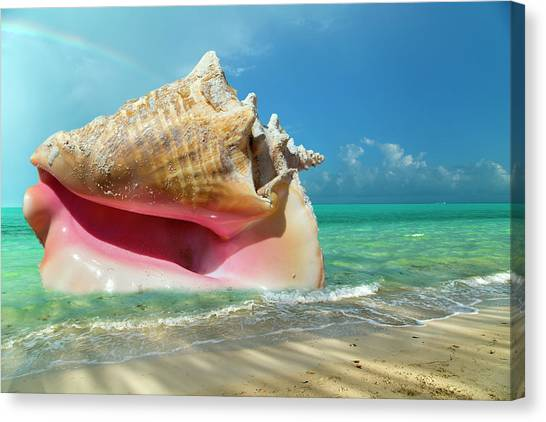 Carribbean Canvas Print -  Conchquered by Betsy Knapp