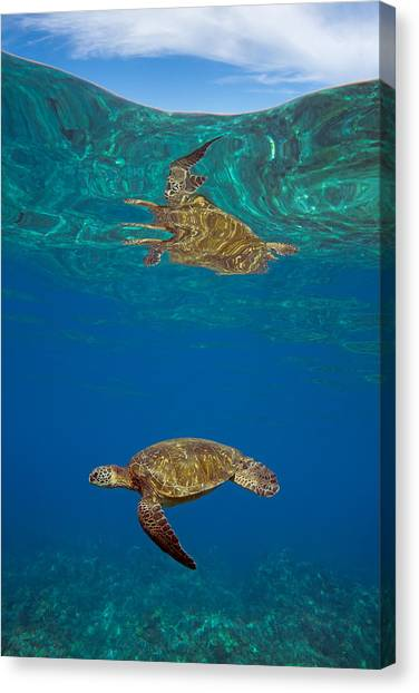 Turtle And Sky Canvas Print