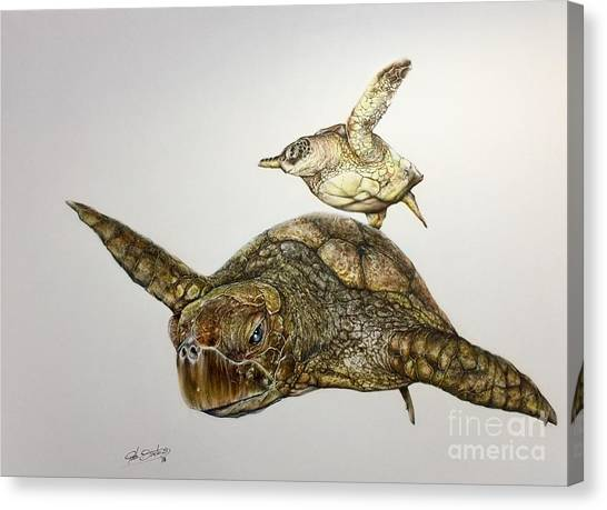 Turtle Iv Canvas Print