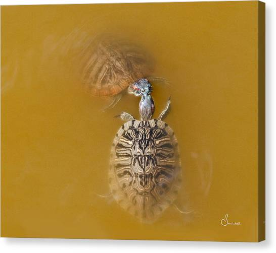 Pairs Canvas Print - Turtle Kiss by Sally Mitchell