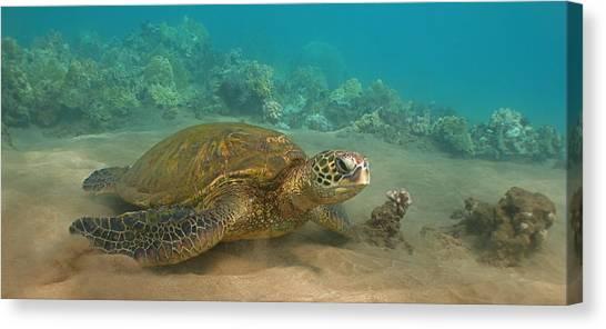Turtle Magic Canvas Print