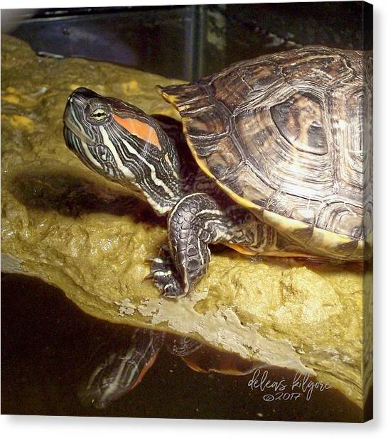 Canvas Print featuring the digital art Turtle Reflections by Deleas Kilgore