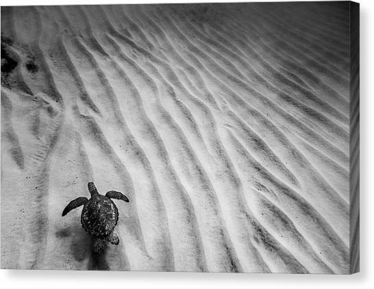 Sea Turtles Canvas Print - Turtle Ridge by Sean Davey