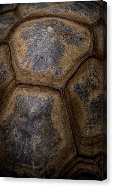 Turtle Shell Canvas Print
