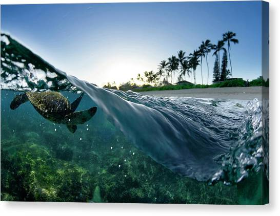 Turtle Split Canvas Print