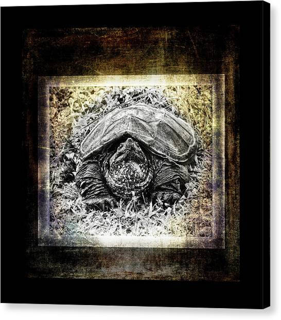Snapping Turtles Canvas Print - Turtle Tv by Susan Capuano