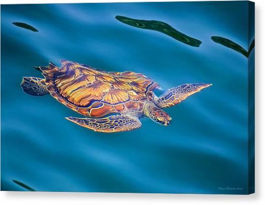 Turtle Up Canvas Print