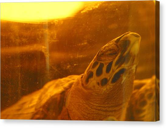 Turtled Canvas Print by Jez C Self