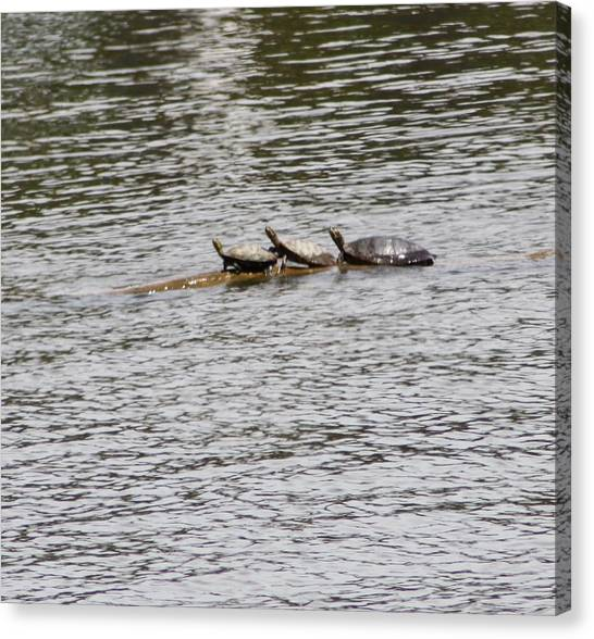 Turtles Canvas Print by Christy Bearden