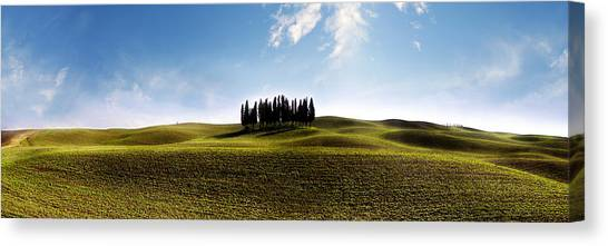 Tuscan Cypress Tree Canvas Print