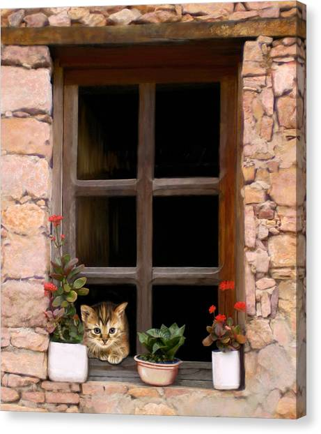 Tuscan Kitten In The Window Canvas Print by Bob Nolin