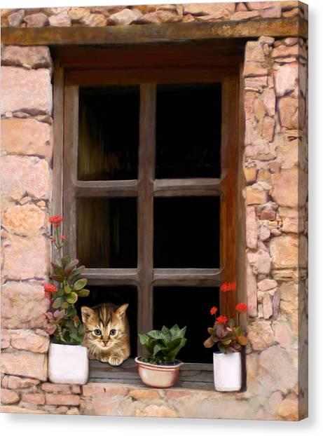 Tuscan Kitten In The Window Canvas Print