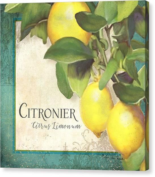 Tuscan Lemon Tree - Citronier Citrus Limonum Vintage Style Canvas Print