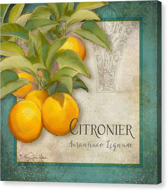 Orange Tree Canvas Print - Tuscan Orange Tree - Citronier Aurantiaco Lignum Vintage by Audrey Jeanne Roberts