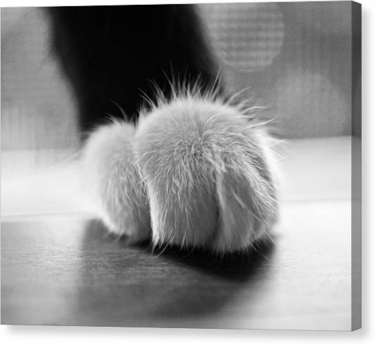 Tuxedo Cat Paw Black And White Canvas Print