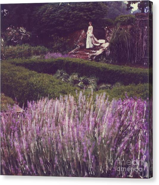 Twilight Among The Lavender Canvas Print by Steven  Godfrey