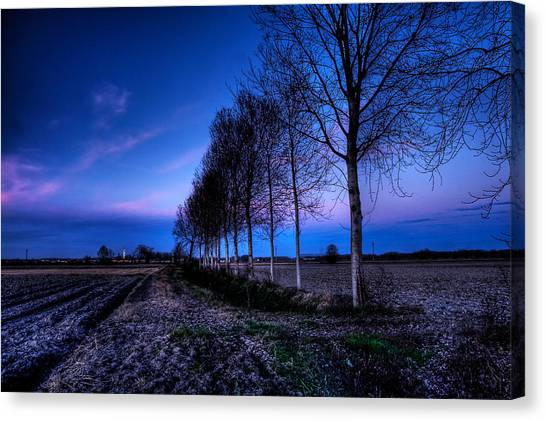 Twilight And Trees Canvas Print