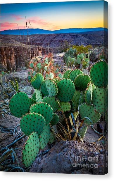 Rio Grande Canvas Print - Twilight Prickly Pear by Inge Johnsson