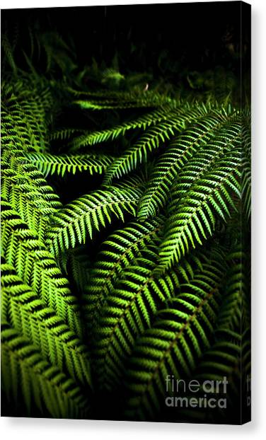 Greenery Canvas Print - Twilight Rainforest Fern  by Jorgo Photography - Wall Art Gallery