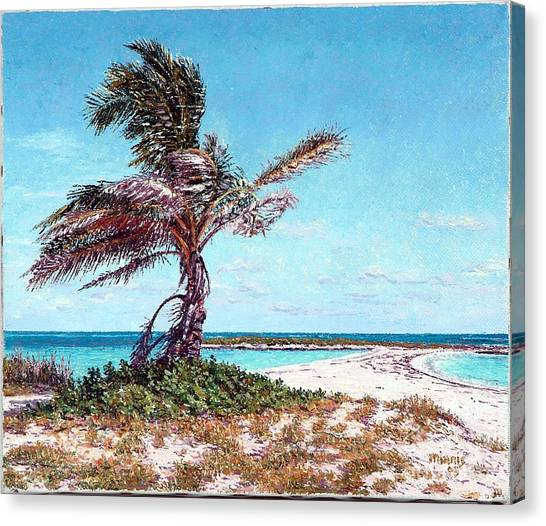 Eleuthera Art Canvas Print - Twin Cove Palm by Eddie Minnis